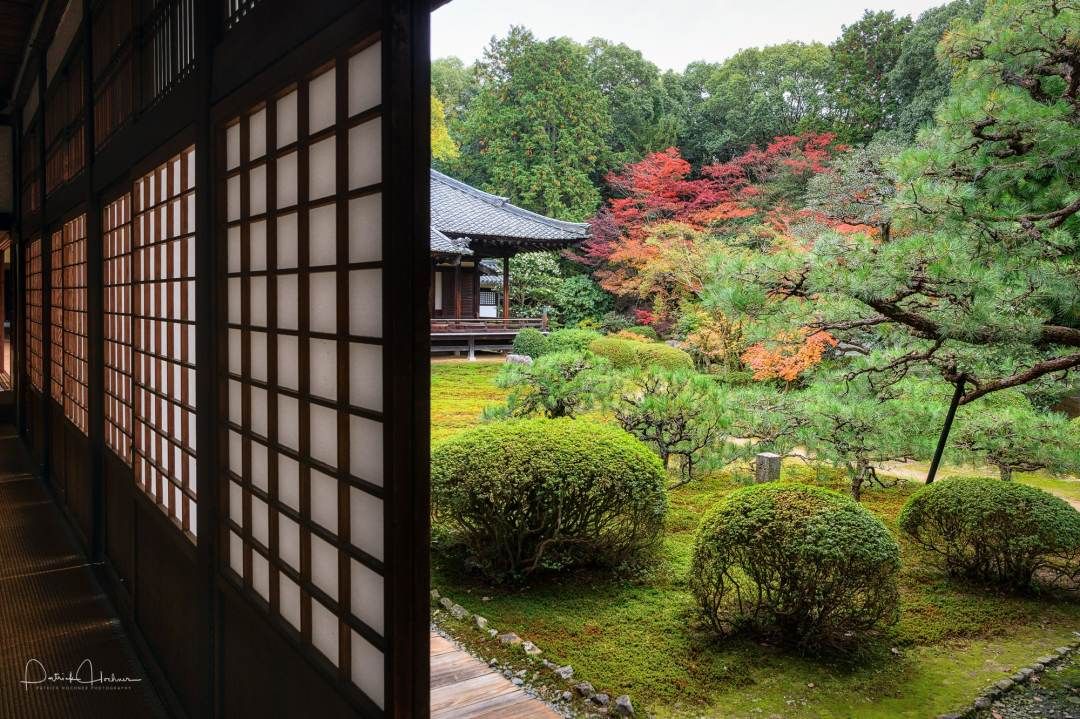 View of the garden during the fall, from the corridor clozsed by shôji, paper windows