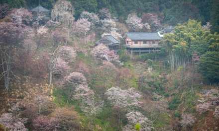 The Hanami Project
