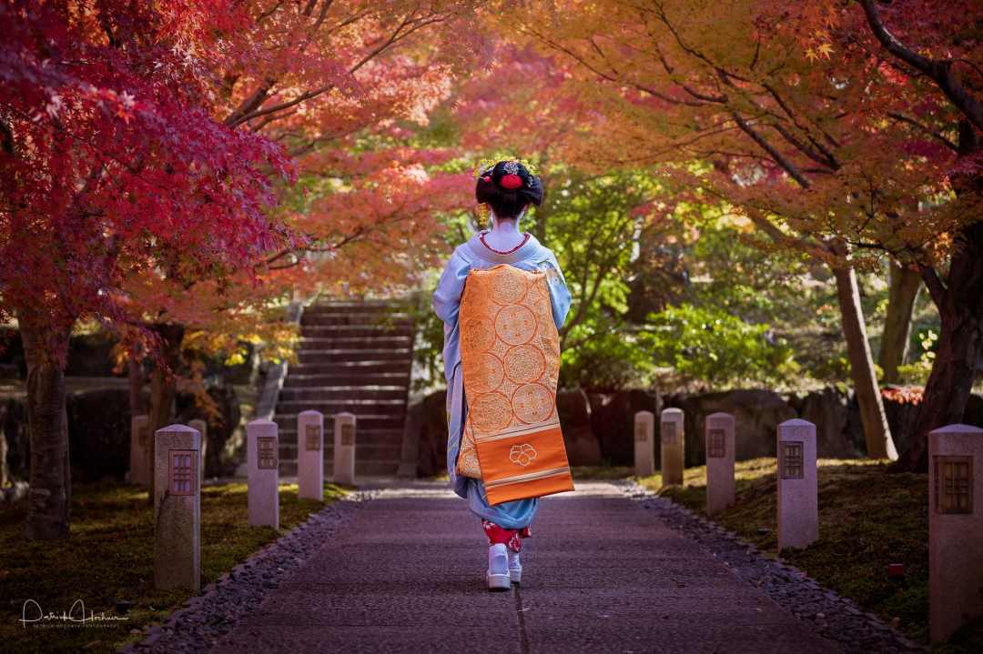 Toward the Fall Foliage, Winner of the Chushakuin Prize at the 13th PPK Maiko and Momiji Photo Contest