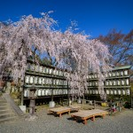 March 2020 – Hanami Photos Exhibition