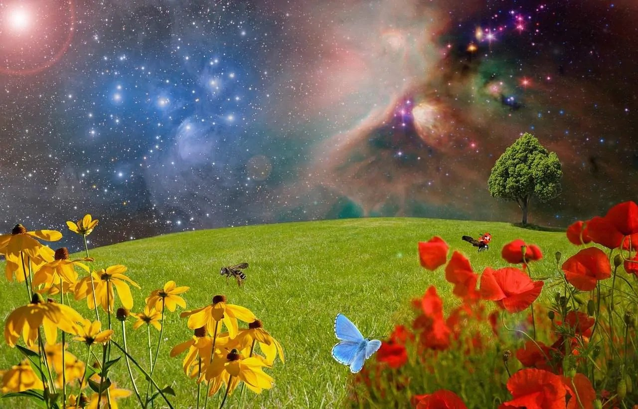 The Law Of Attraction Amp Vibrational Alignment