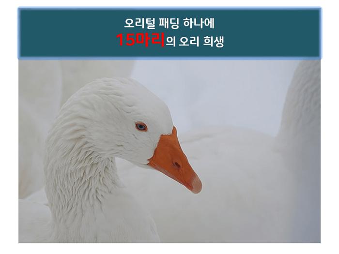 겨울철 패딩, 동물 보호하는 인공충전재 패딩이 대세!