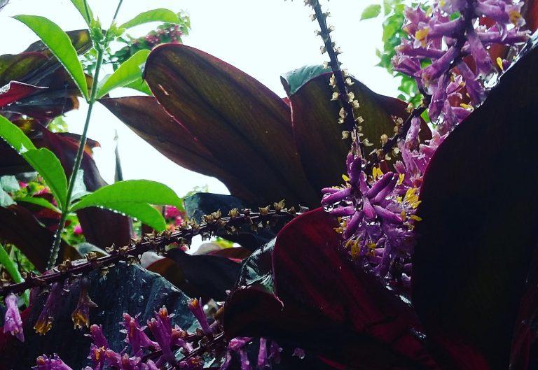Guadeloupe : magnifique nature, même par temps de pluie