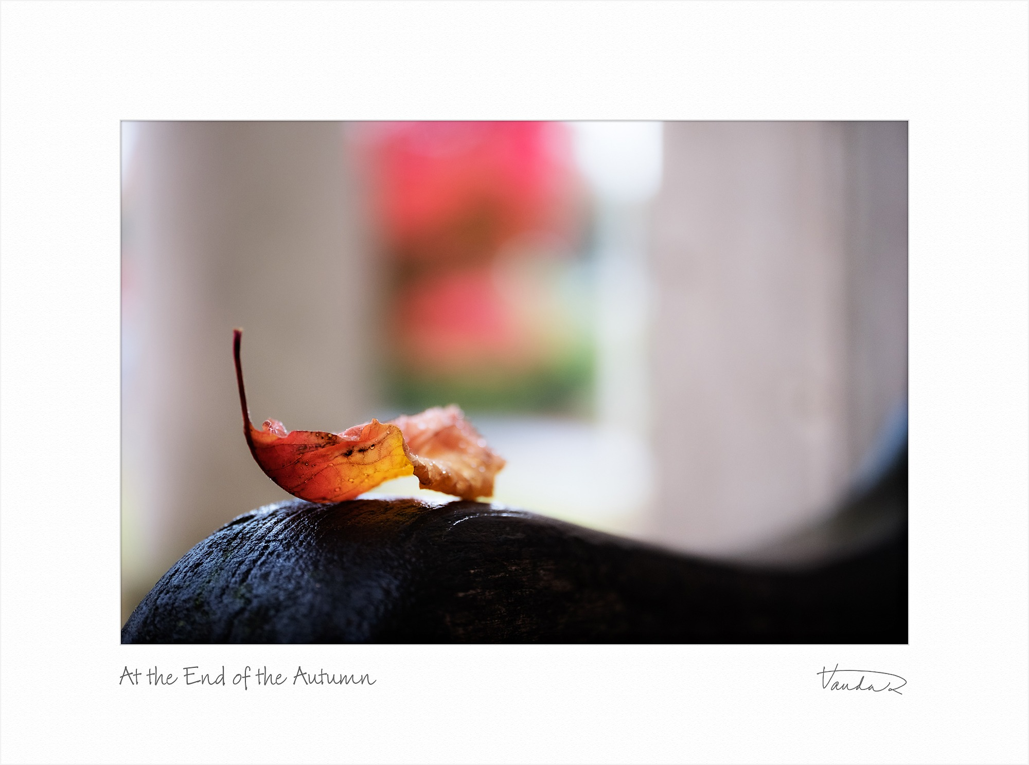 At the end of the Autumn