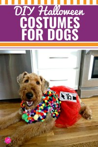 Diy Thanksgiving Costumes For Dogs