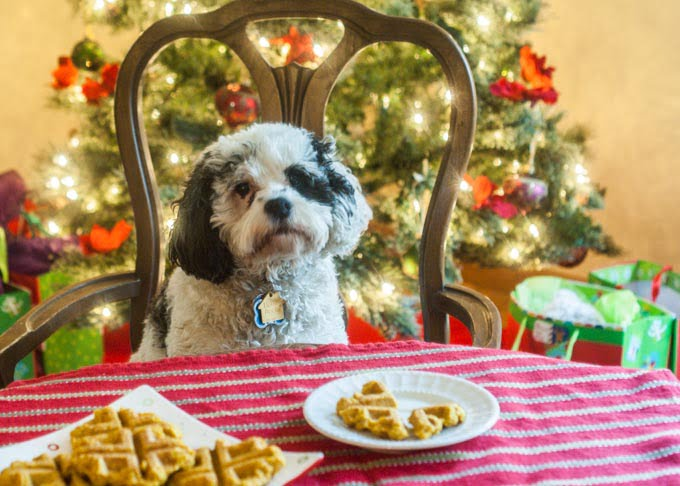 Healthy Dog Treat Recipes Christmas The Best Dog 2017