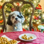 These Christmas pumpkin dog waffles are a healthy and easy way to treat your pet this holiday. Made with only 5 ingredients and you can feel good about giving your pup their own special breakfast.