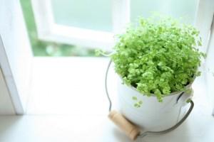 窓と観葉植物