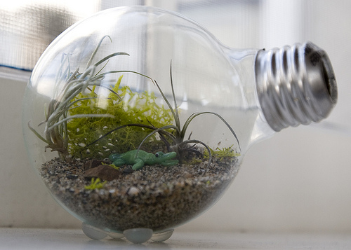 Lightbulb-Terrarium-Project
