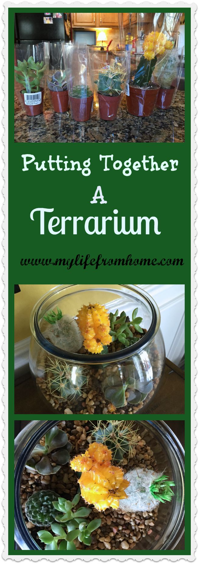 Putting Together a Terrarium by www.mylifefromhome.com