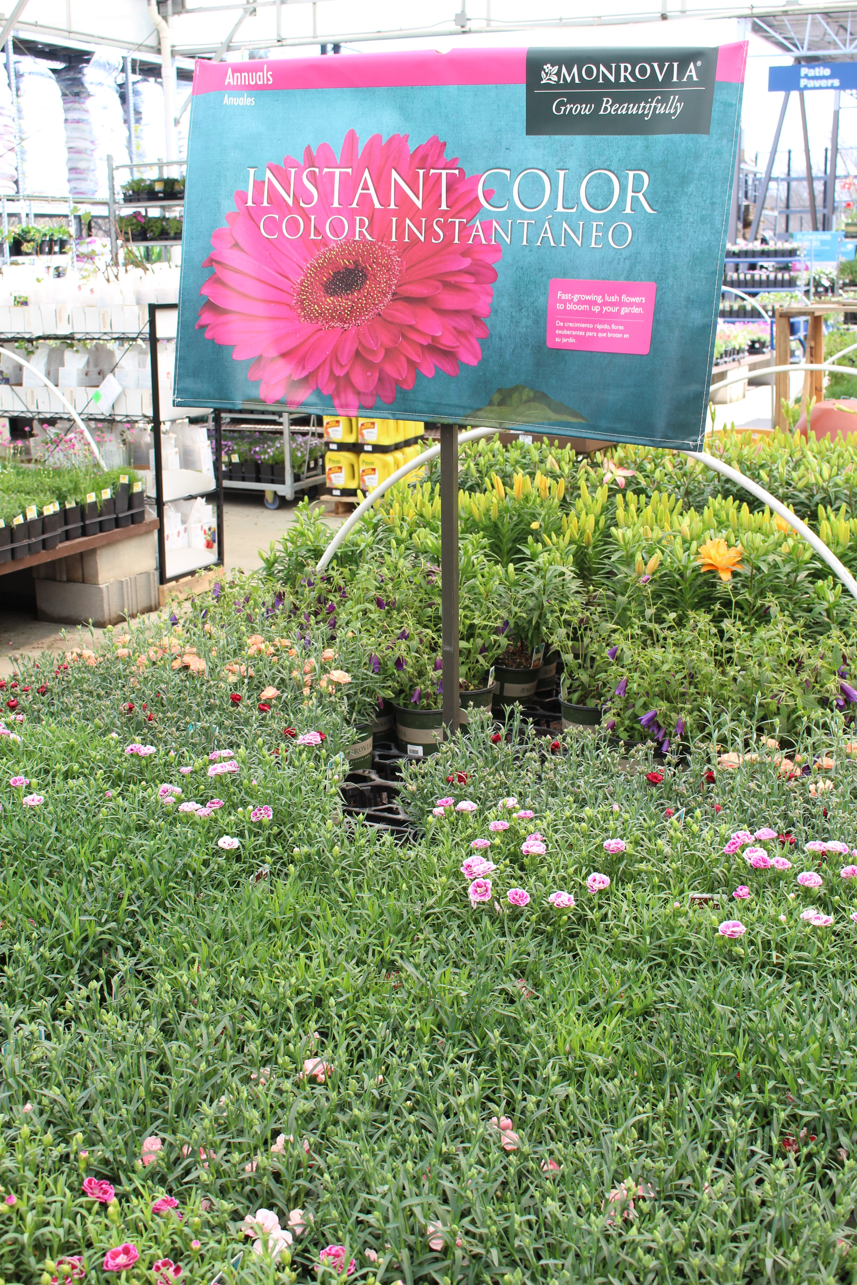 ... How To Choose The Best Plants For A Butterfly Garden  Butterflies   Plants That Attract ...