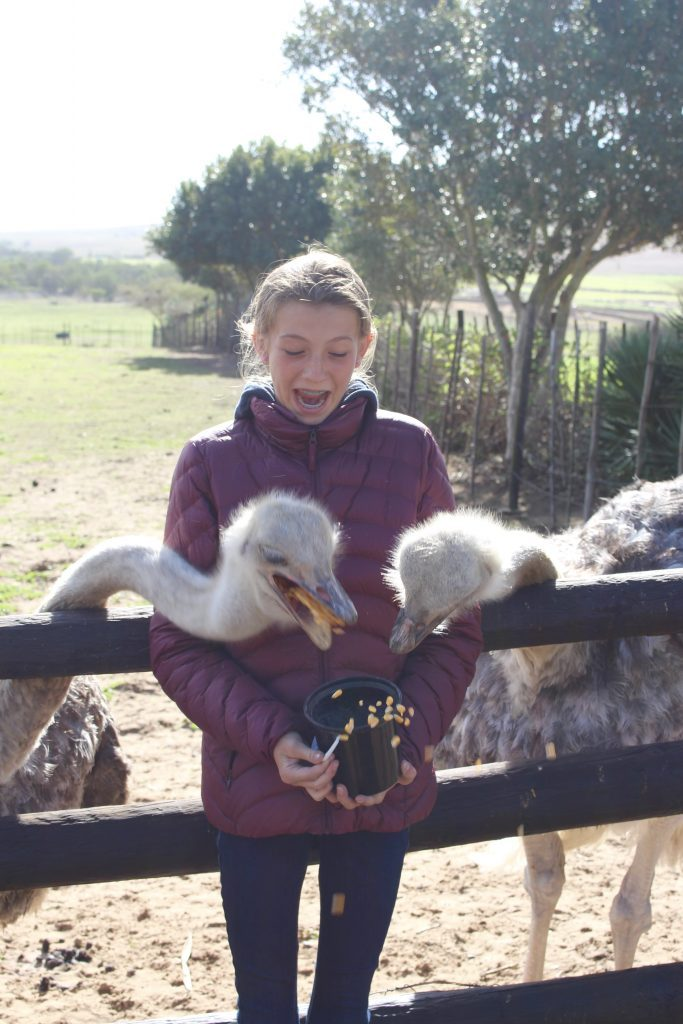 Capetown- South Africa- ostrich farm- travel- vacation- must see and do- adventure- family vacation- culture- africa- cape
