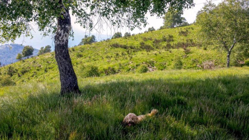 trekking-col-cane