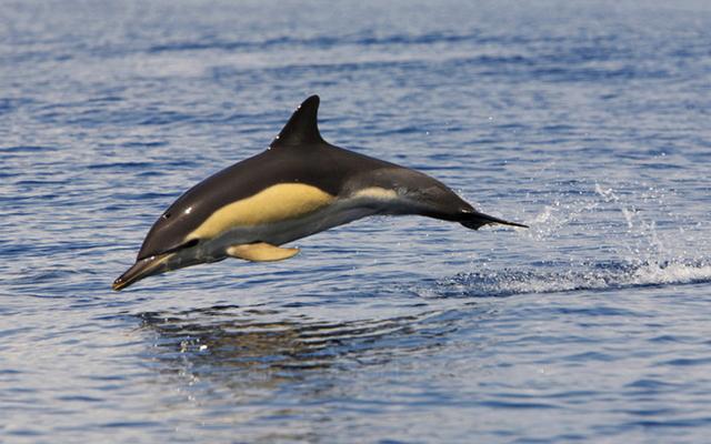 avvistamento-cetacei-genova