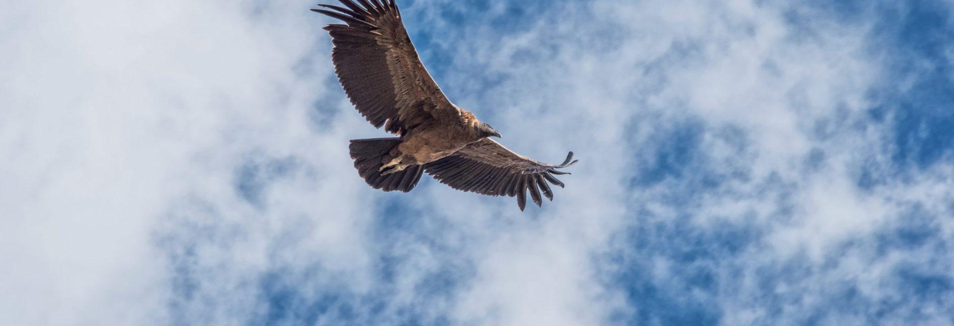 Colca Canyon in Perù: volevo vedere i condor in volo