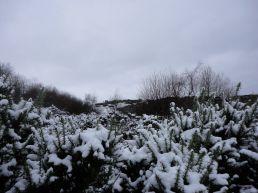 hillend-jan201315