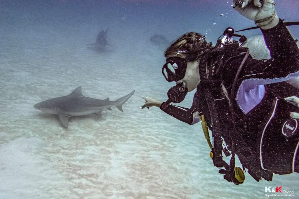 mergulho com tubarão-touro na playa del carmen