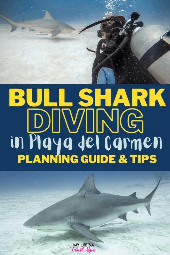Mergulho com tubarões-touro em Playa del Carmen: tudo o que você precisa saber! A melhor companhia para ir, quando os tubarões-touro estão aqui, como é o mergulho do tubarão, se os tubarões são perigosos e que equipamento fotográfico obter! Confira sua lista de mergulho com tubarões-touro no México até março!#bullshark #sharkdiving #scubadive #scubadiving #bucketlist