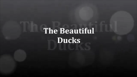 The Beauitful Ducks