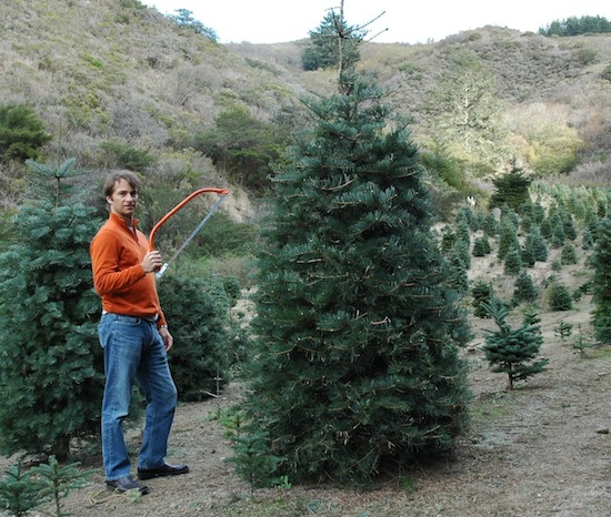 Cut Down Christmas Tree Near Me.The Christmas Tree Massacre