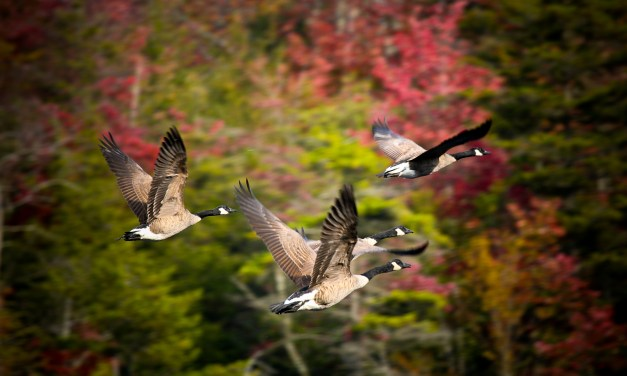 I Bird NY Engages New Yorkers of All Ages and Abilities to Enjoy Birding