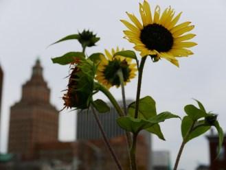 2015 - Urban Garden Year One