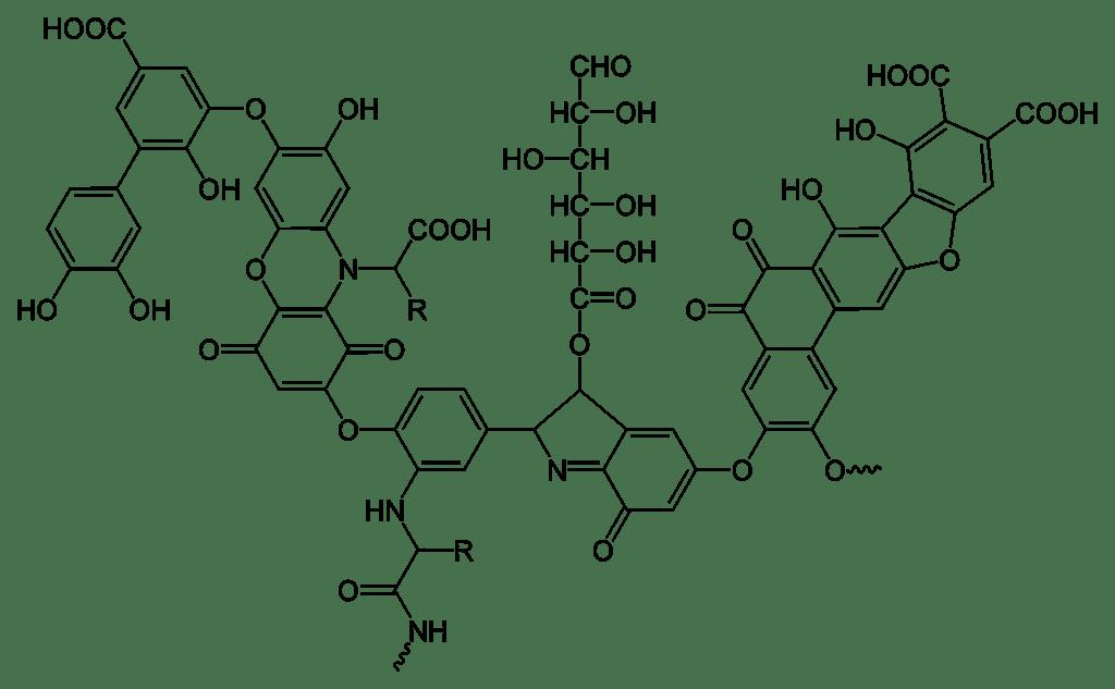 Гуминовая и фульвовая кислотыHumic and fulvic acids humans