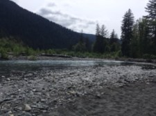 Five Mile Island. Our view of the Hoh River. The trees to the right is where we saw the baby deer come out to graze.