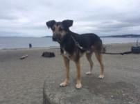 Argo on Alki Beach. mylocalcollaborative.com