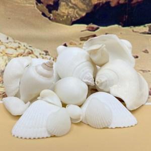1kg Bulk Shells
