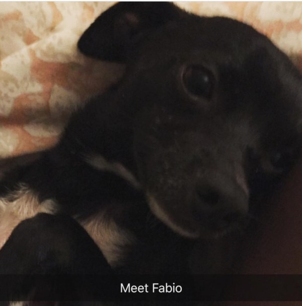 20+ Fabio Dog Pictures and Ideas on Weric