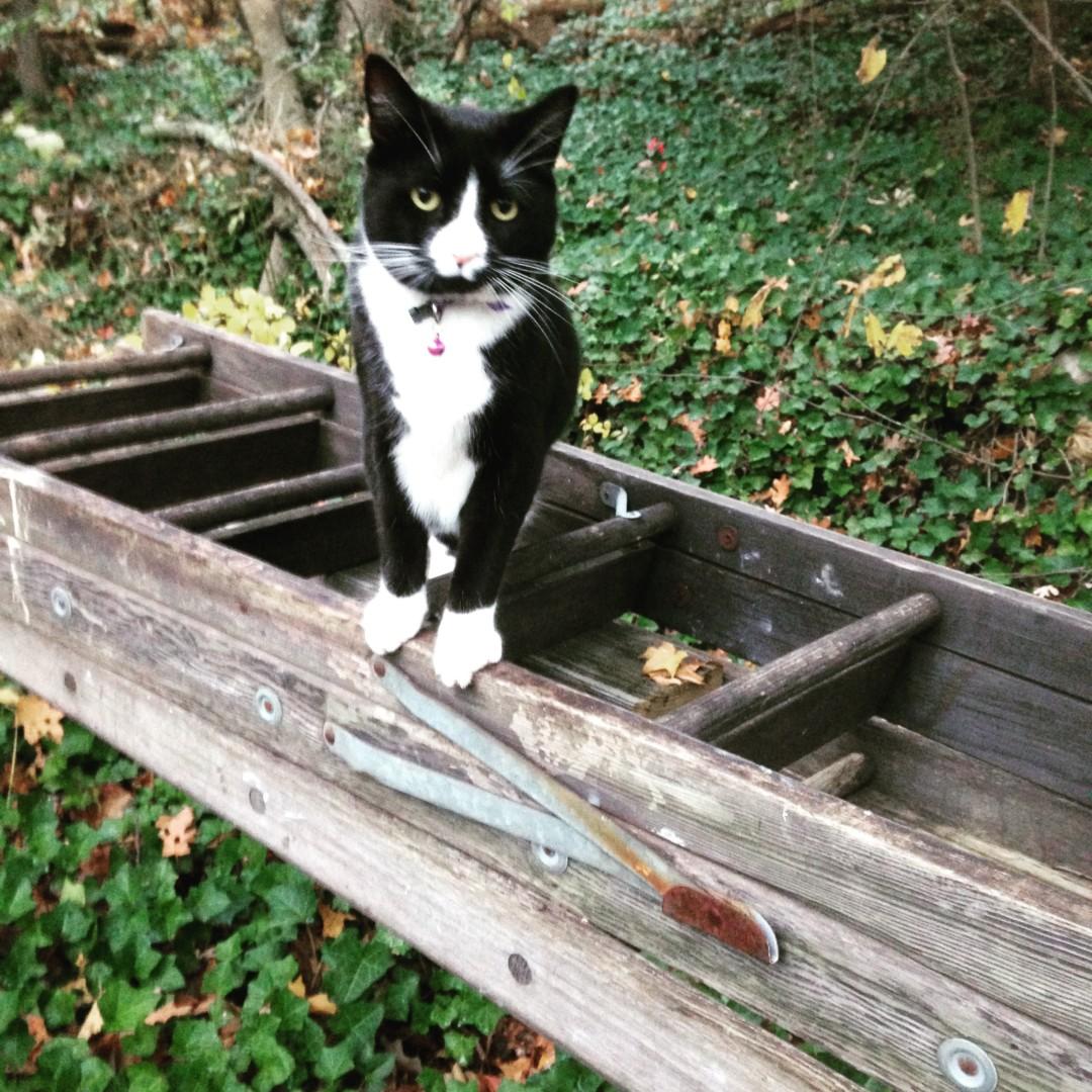 Lost Cat Woburn Massachusetts  Ellsbury