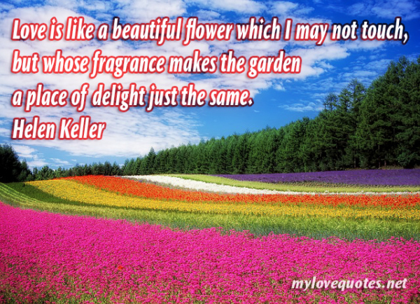 love is like a beautiful flower