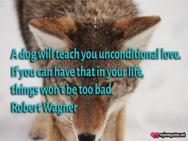 a dog will teach you unconditional love
