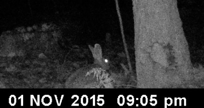 Rabbits are nocturnal