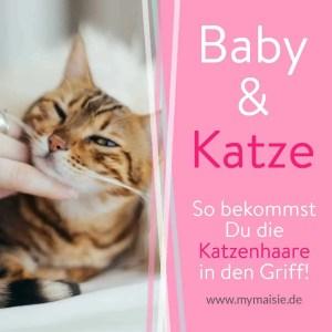 My Maisie Katzenhaare los werden Baby