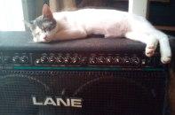 #kitten #amp #music views