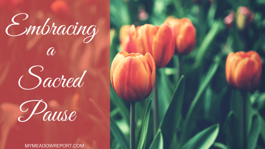 Embracing a Sacred Pause
