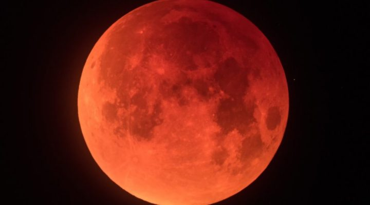 Blue Blood Moons, Planting Trees, and Celebrating the Process