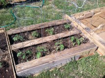Purposed Pallets Raised Bed Gardens