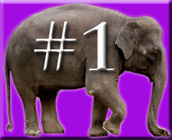 The Four Ignored Elephants of Quality in the Classroom & Teacher Retention (3/6)