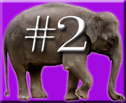 The Four Ignored Elephants of Quality in the Classroom & Teacher Retention (5/6)