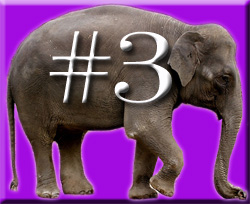 The Four Ignored Elephants of Quality in the Classroom & Teacher Retention (6/6)