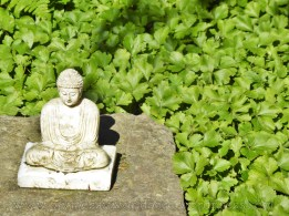 watermarked-silent buddha