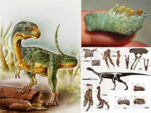 Chilesaurus_diegosuarezi-xl