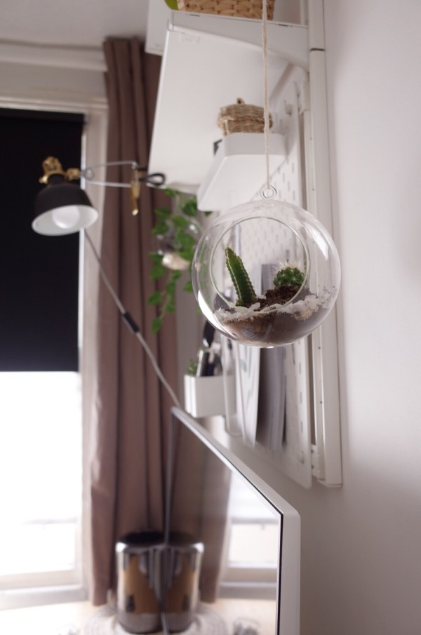 Two terrariums are hanging from each side of the shelves