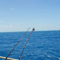 Florida Fishing Destinations