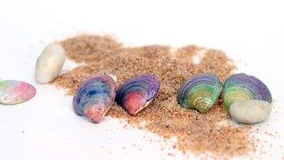DIY Seashell Earrings