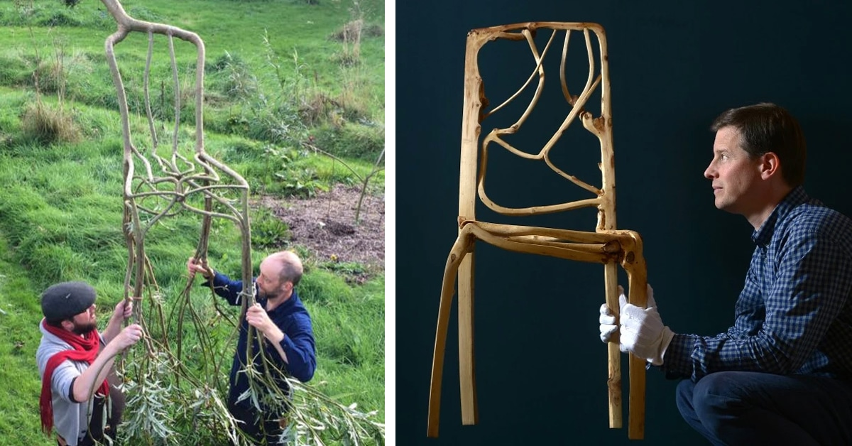 Tree Furniture Grown From the Ground by Gavin Munro