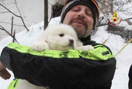 Puppies Survive Avalanche